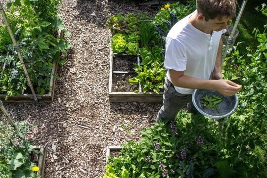 makkelijke moestuin app: moestuinieren voor beginners - oogstkoken